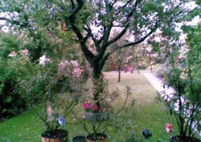 2008 – Im Juni verursachte ein Hagelunwetter viele Schäden in den Gärten