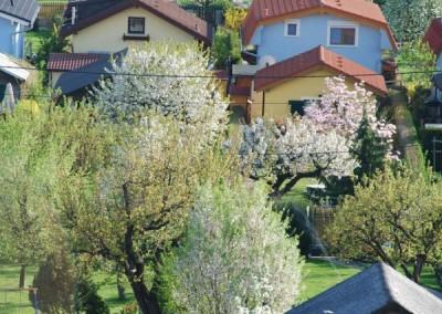 2009 – Detail aus der Anlage mit blühenden Bäumen