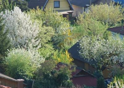 2009 – Im Frühling blühende Obstbäume